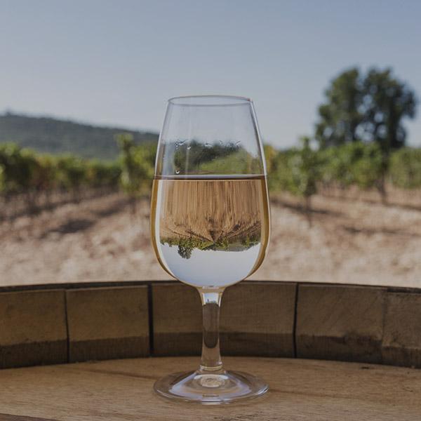 Une dégustation des vins Cassis